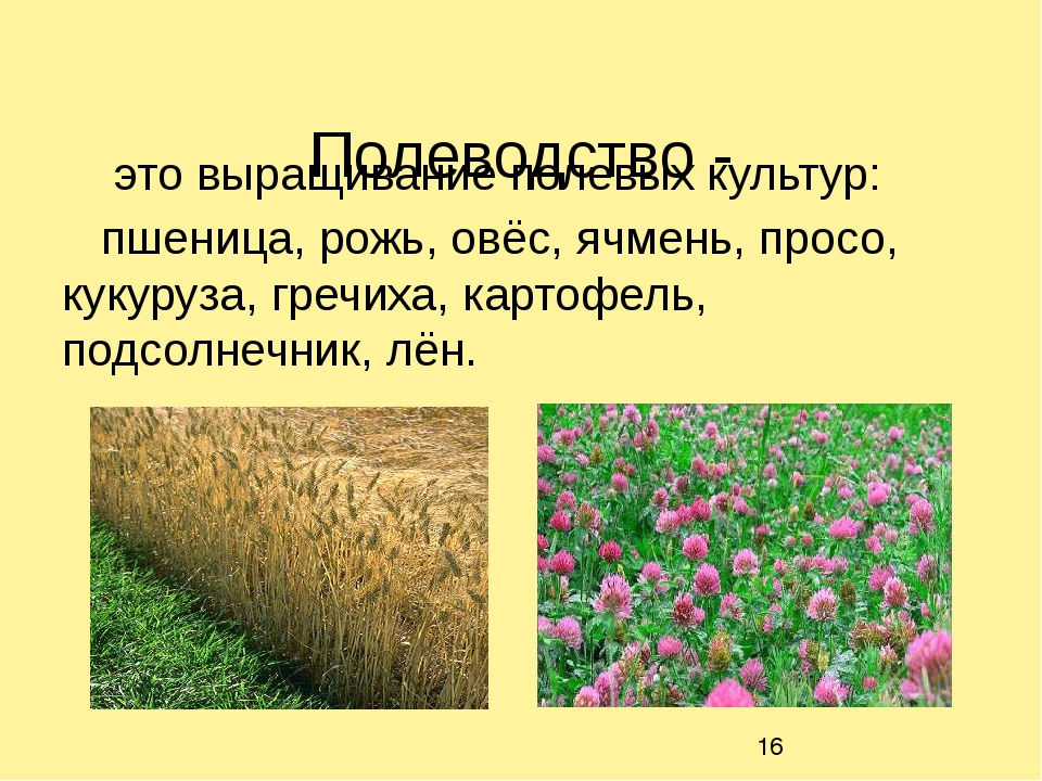 Полеводство - это выращивание полевых культур: пшеница, рожь, овёс, ячмень,...