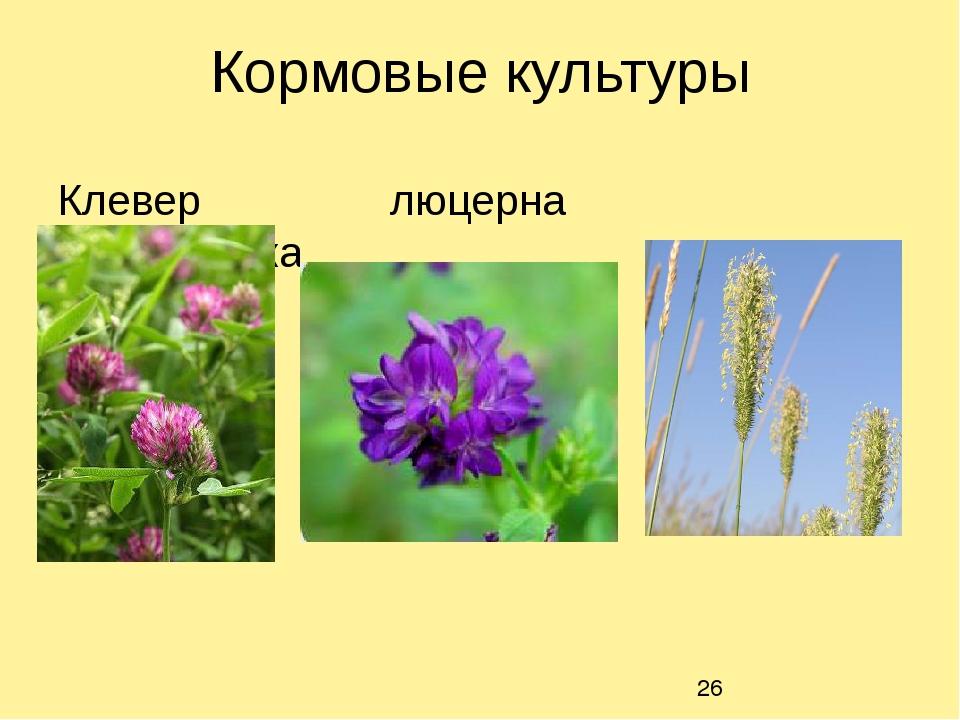 Кормовые культуры Клевер люцерна тимофеевка