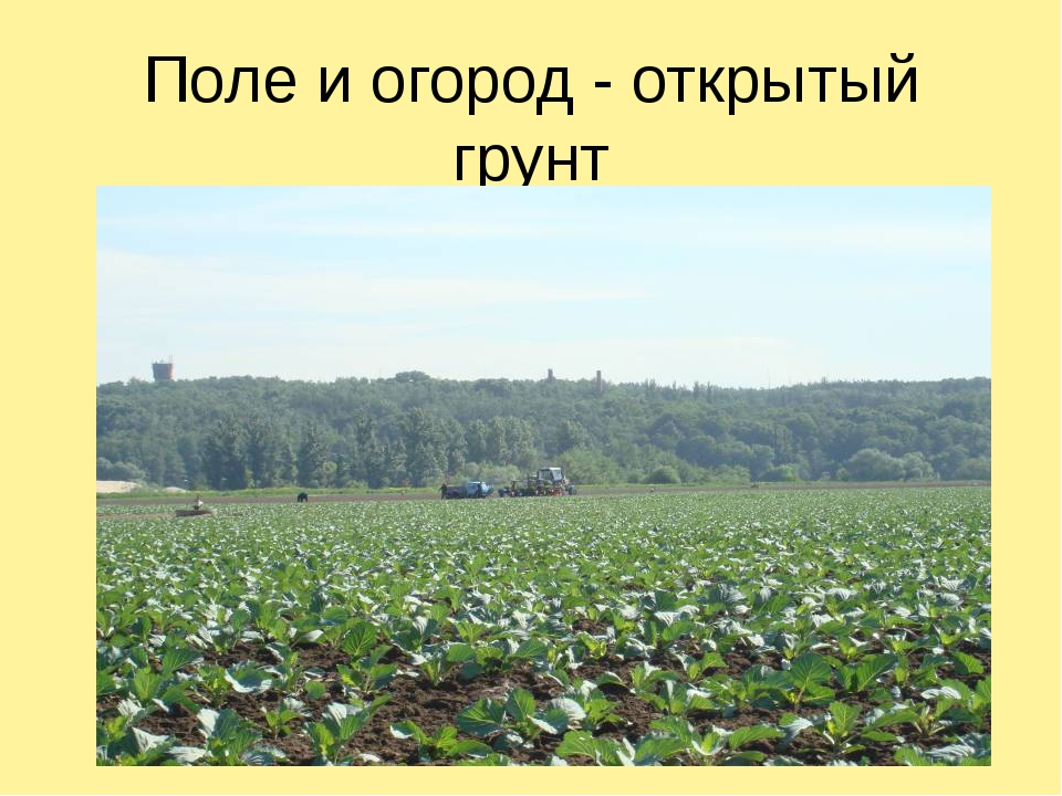 Поле и огород - открытый грунт
