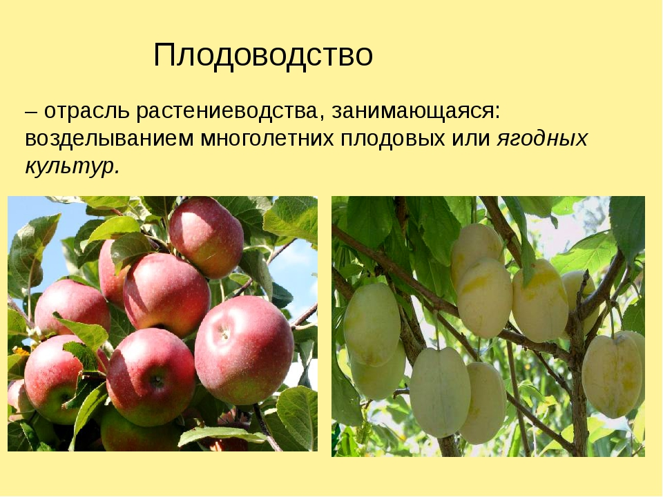 Плодоводство – отрасль растениеводства, занимающаяся: возделыванием многолетн...