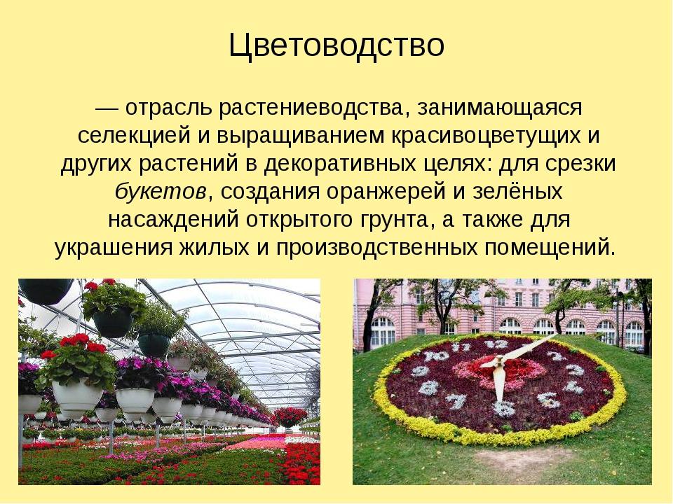 Цветоводство — отрасль растениеводства, занимающаяся селекцией и выращиванием...