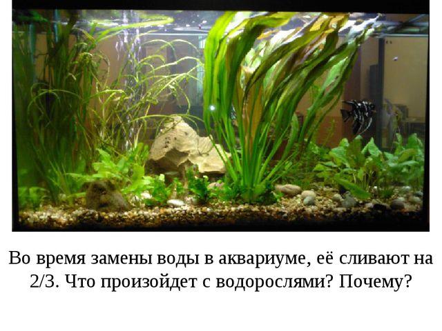Во время замены воды в аквариуме, её сливают на 2/3. Что произойдет с водорос...