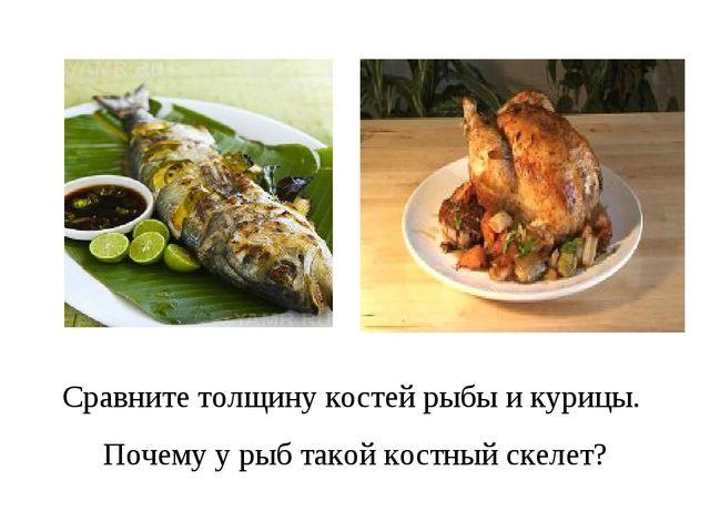 Сравните толщину костей рыбы и курицы. Почему у рыб такой костный скелет?