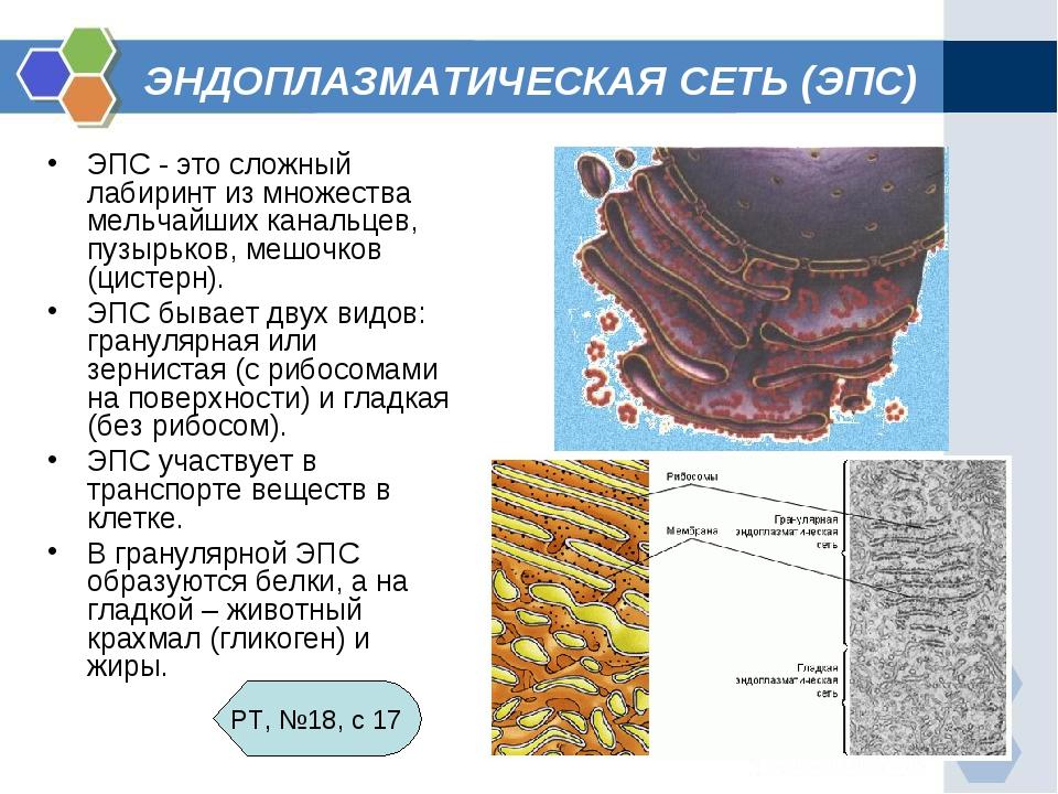 Эндоплазматическая сеть картинка
