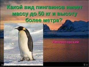 Какой вид пингвинов имеет массу до 50 кг и высоту более метра? Императорский