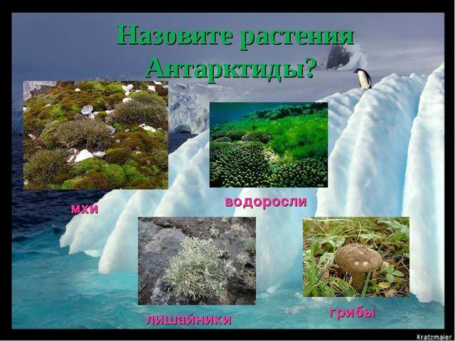 Назовите растения Антарктиды? мхи лишайники водоросли грибы