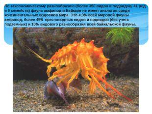 По таксономическому разнообразию (более 350 видов и подвидов, 41 род и 6 семе