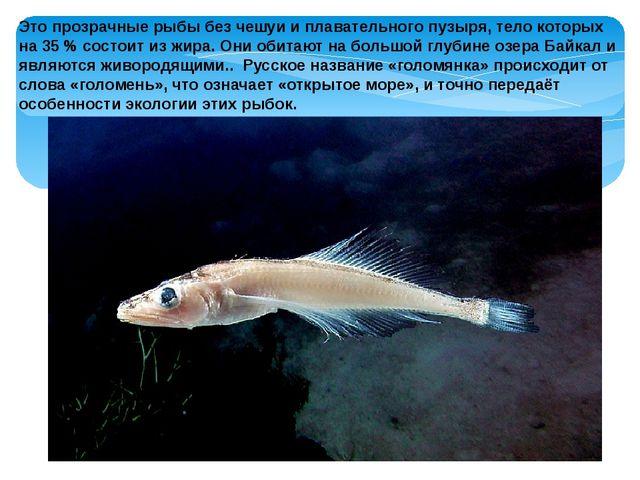 Это прозрачные рыбы без чешуи и плавательного пузыря, тело которых на 35% со...