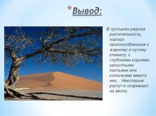 В пустынях редкая растительность, хорошо приспособленная к жаркому и сухому к