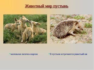 Животный мир пустынь маленькая лисичка корсак В пустыне встречаются ушастый еж
