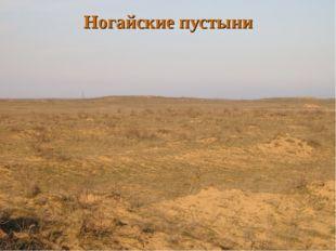 Ногайские пустыни
