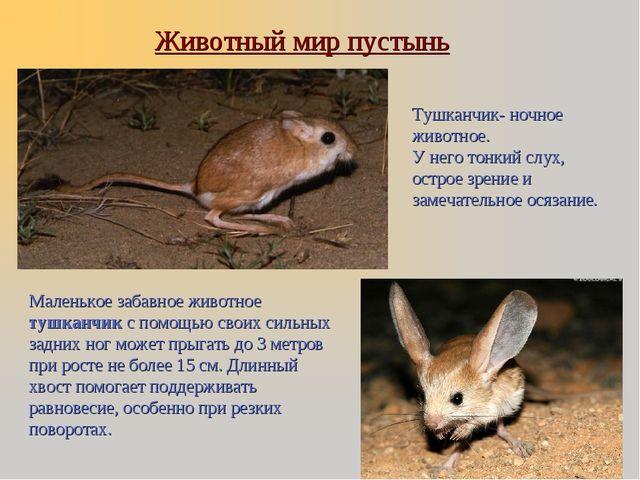 Животный мир пустынь Маленькое забавное животное тушканчик с помощью своих си...