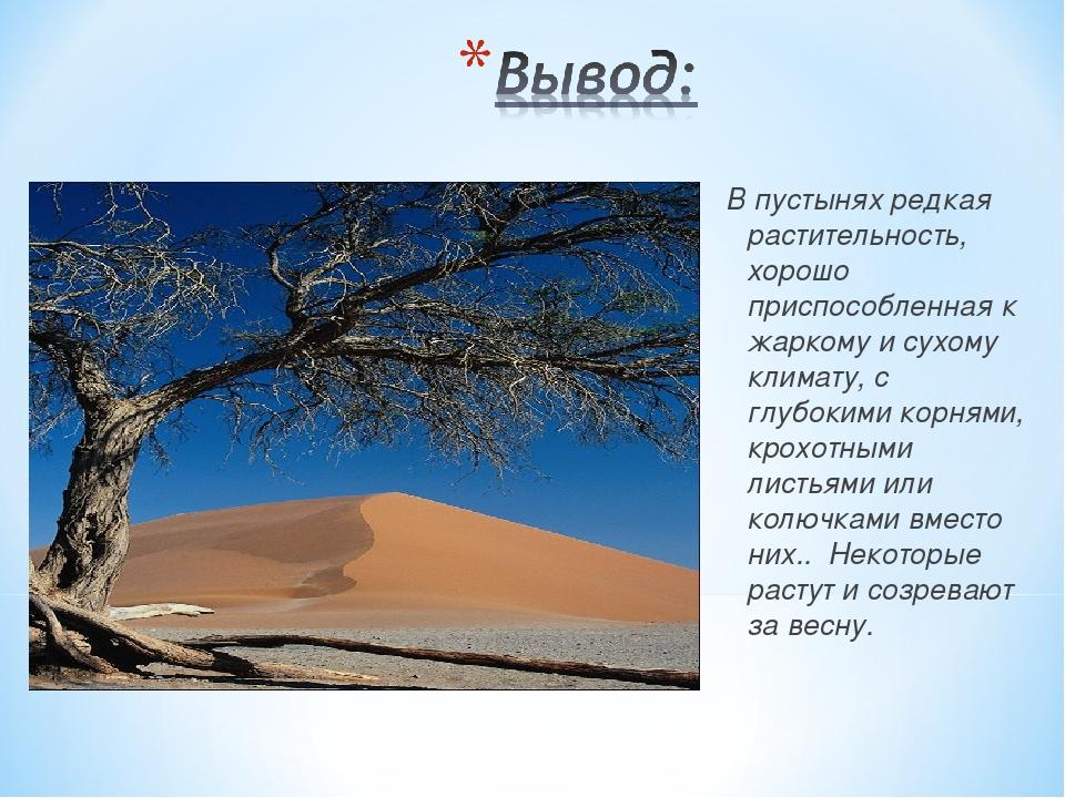 В пустынях редкая растительность, хорошо приспособленная к жаркому и сухому к...