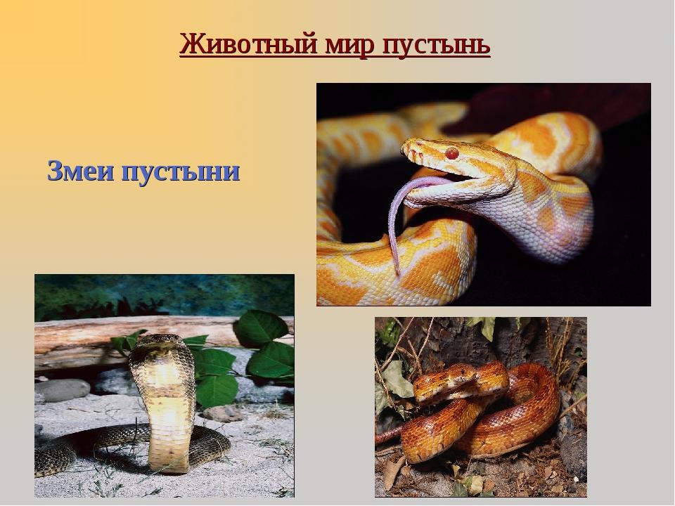 Животный мир пустынь Змеи пустыни