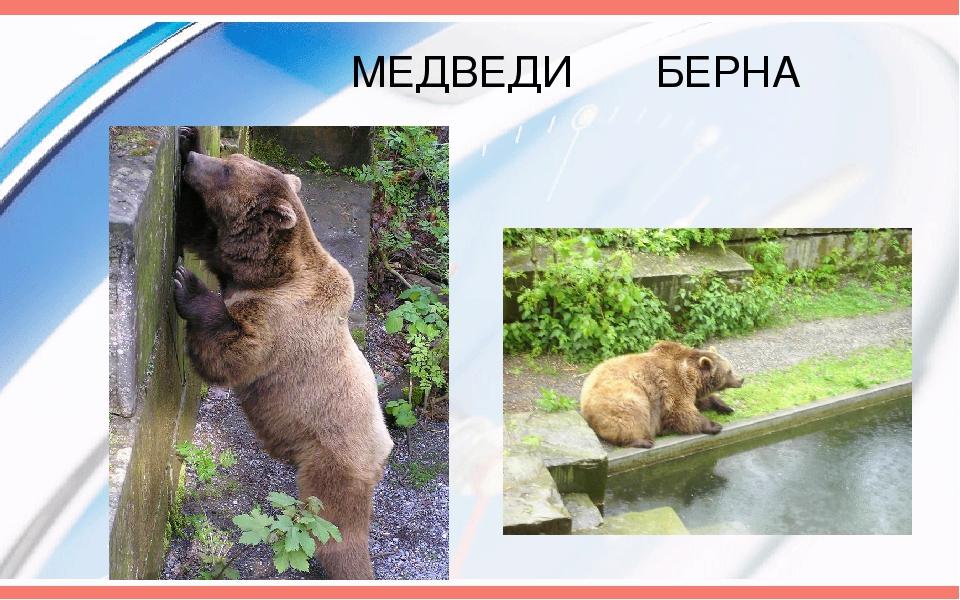 МЕДВЕДИ БЕРНА