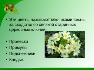 Эти цветы называют ключиками весны за сходство со связкой старинных церковных