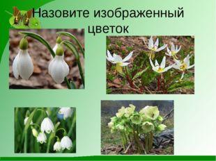 Назовите изображенный цветок