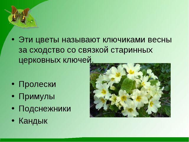 Эти цветы называют ключиками весны за сходство со связкой старинных церковных...