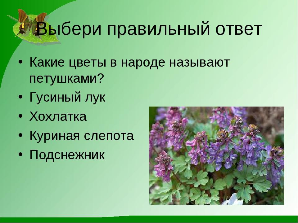 Выбери правильный ответ Какие цветы в народе называют петушками? Гусиный лук...