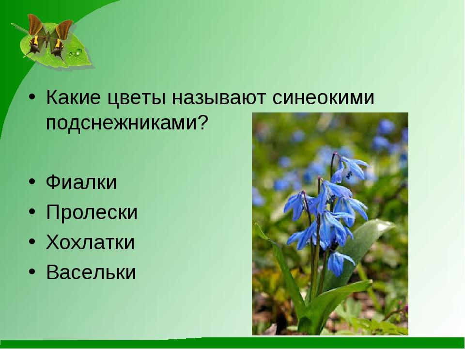 Какие цветы называют синеокими подснежниками? Фиалки Пролески Хохлатки Васельки