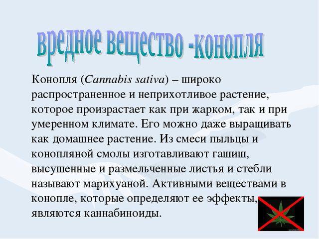 Конопля (Cannabis sativa) – широко распространенное и неприхотливое растение...