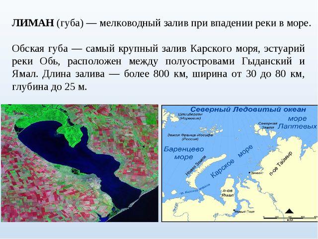 ЛИМАН (губа) — мелководный залив при впадении реки в море. Обская губа — самы...
