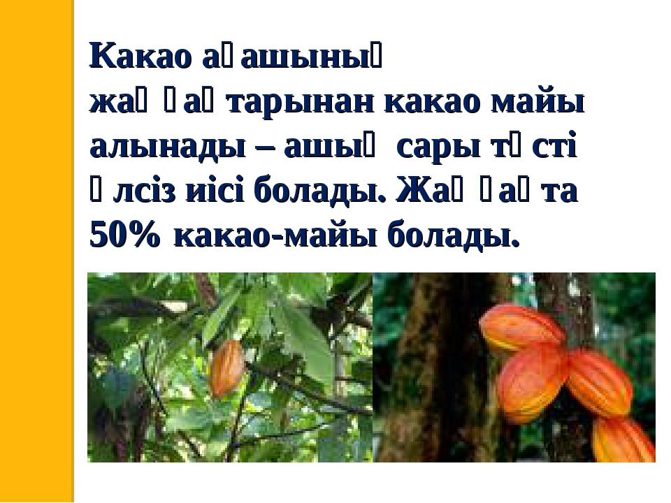 Какао ағашының жаңғақтарынан какао майы алынады – ашық сары түсті әлсіз иісі...