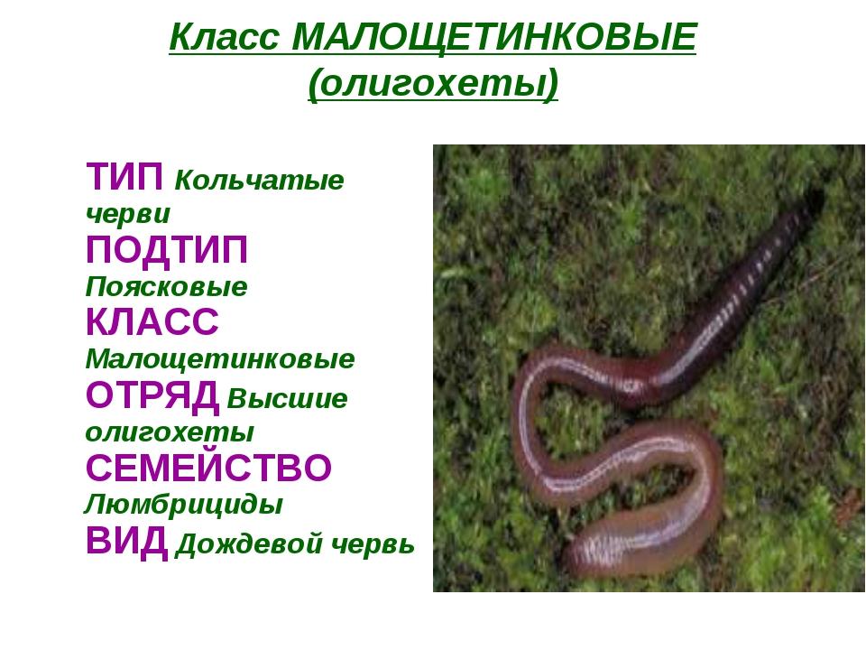 hello_html_m118b4e39.jpg
