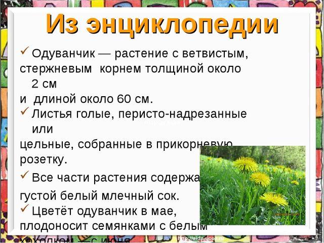 Из энциклопедии Одуванчик— растение с ветвистым, стержневым корнем толщиной...