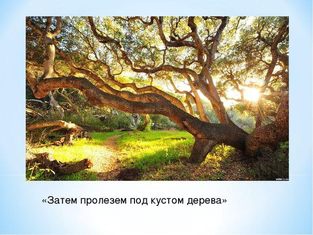 «Затем пролезем под кустом дерева»