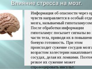 Информация об опасности через органы чувств направляется в особый отдел мозга