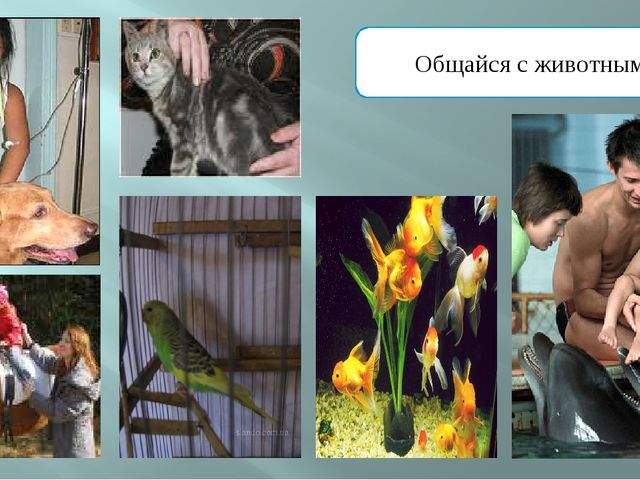Общайся с животными