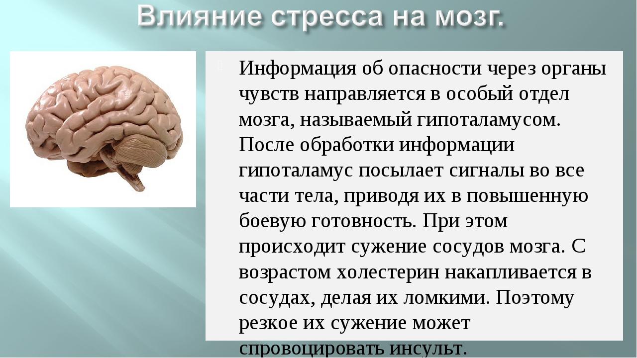 Информация об опасности через органы чувств направляется в особый отдел мозга...