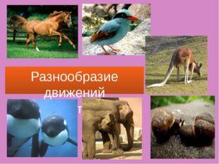 Разнообразие движений животных.