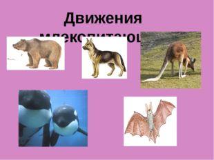 Движения млекопитающих