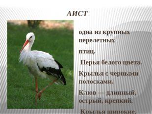 АИСТ одна из крупных перелетных птиц. Перья белого цвета. Крылья с черными по