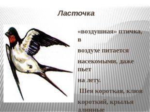 Ласточка «воздушная» птичка, в воздухе питается насекомыми, даже пьет на лету