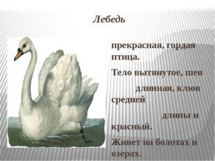Лебедь прекрасная, гордая птица. Тело вытянутое, шея длинная, клюв средней дл