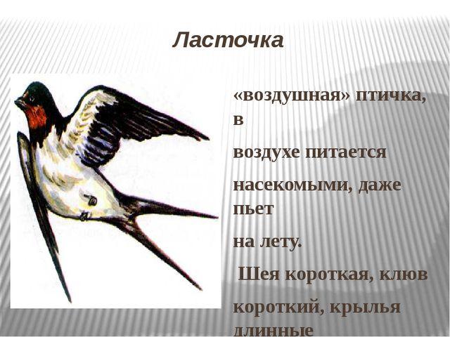 Ласточка «воздушная» птичка, в воздухе питается насекомыми, даже пьет на лету...