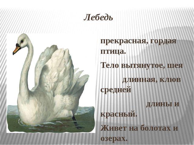 Лебедь прекрасная, гордая птица. Тело вытянутое, шея длинная, клюв средней дл...