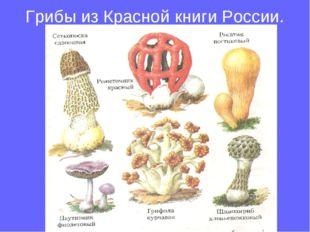 Грибы из Красной книги России.