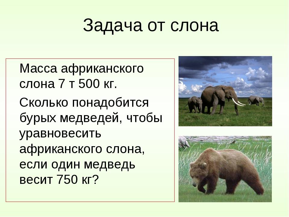 Задача от слона Масса африканского слона 7 т 500 кг. Сколько понадобится бу...