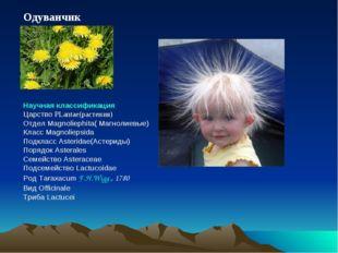 Одуванчик Научная классификация Царство PLantae(растения) Отдел Magnoliephita