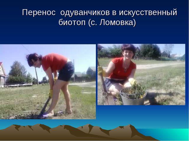 Перенос одуванчиков в искусственный биотоп (с. Ломовка)