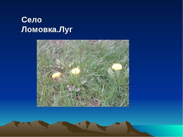 Село Ломовка.Луг