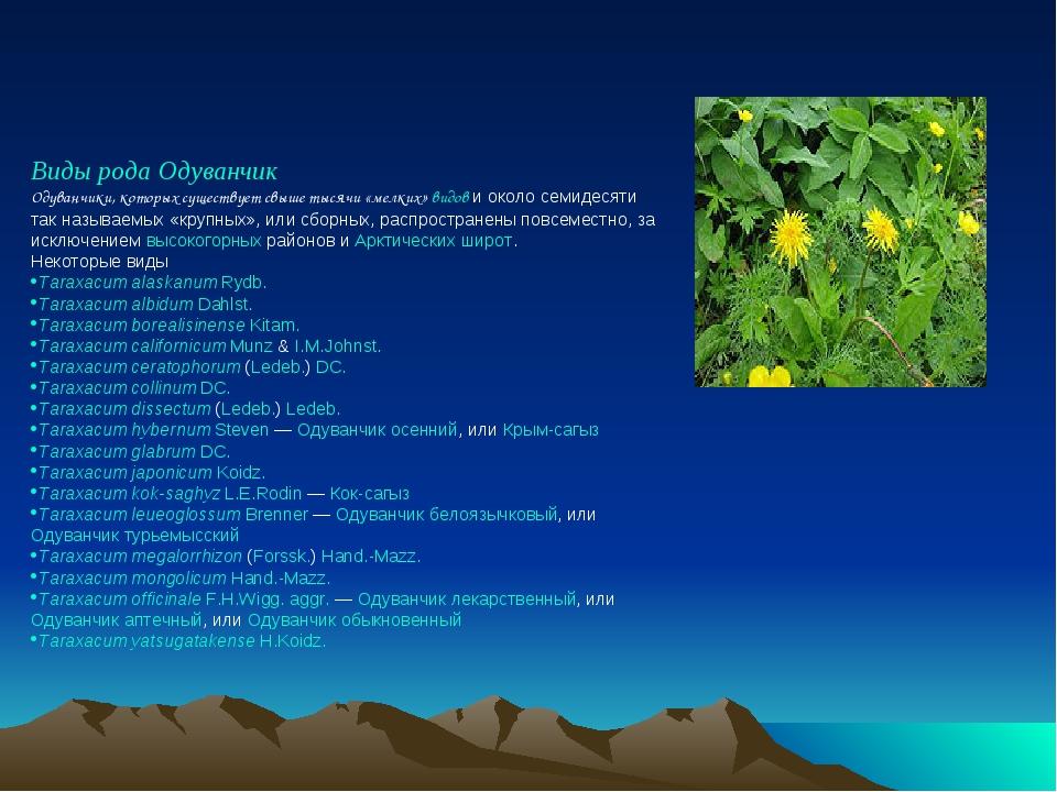Виды рода Одуванчик Одуванчики, которых существует свыше тысячи «мелких» видо...