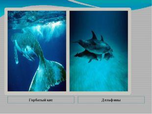 Горбатый кит Дельфины