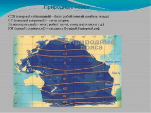 Природные пояса ССП (северный субполярный) – богат рыбой (минтай, камбала, се