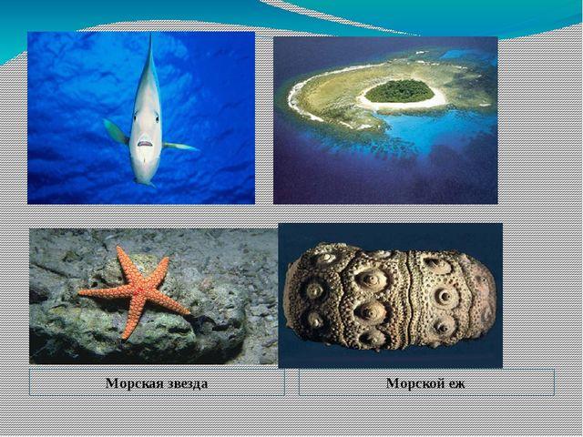 Морская звезда Морской еж