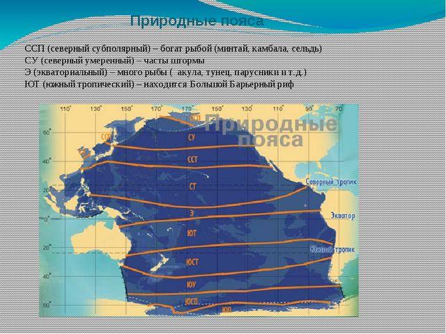 Природные пояса ССП (северный субполярный) – богат рыбой (минтай, камбала, се...